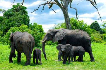 Elephant Family - Chobe National Park - Botswana