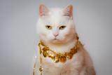 Happy Cat - 240731172