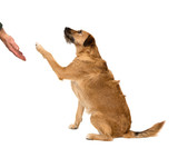 Dog paw and human hand, friendship on white background