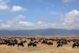 Gnus in der Savanne der Serengeti in Tansania