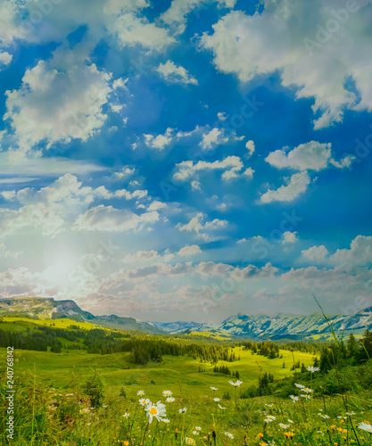 Summer time mountain nature landscape in Switzerland. Flowers at foreground. Beautiful sky above