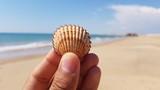 Mão segurando concha com o mar desfocado ao fundo - 240772107