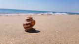 Concha enterrada na areia do mar com o oceano ao fundo - 240772184
