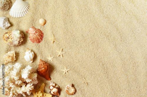 Leinwanddruck Bild Sea shells with sand as background. Summer beach.