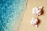 Seashell on the summer beach in sea water. Summer background. Summer time. - 240777797