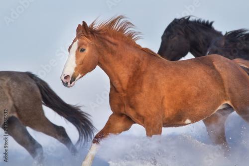 Horse herd run free in snow