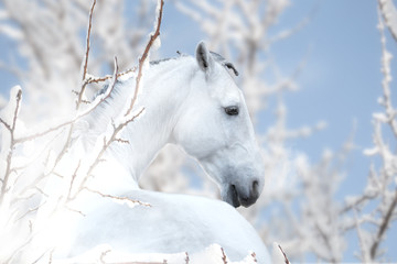 White horse stay on the winter background