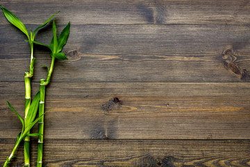 Bamboo shoot. Bamboo stem and leaves on dark wooden background top view copy space