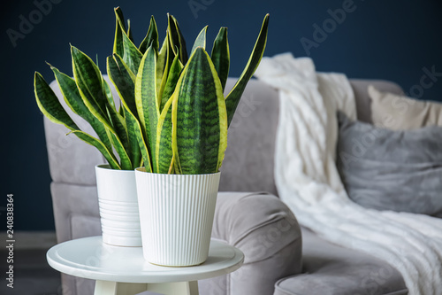 Leinwanddruck Bild Green houseplants in interior of modern room