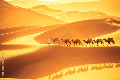 desert camels team - 240846916