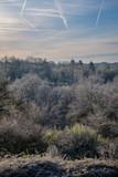 Paysage hivernal et forestier, givre et trainées d'avion