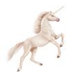 cheval, animal, blanc, licorne , isolé, noir, silhouette, étalon, coeur, galop, mammifère, course, crin, illustration, sauvage, des chevaux, courir, ferme, nature, cheval, jument, chevalin, andalou, a - 240854970