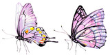 beautiful pink butterfly,watercolor,isolated on a white