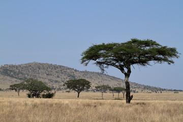 Die Savanne der Serengeti in Tansania