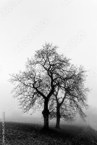 obraz PCV silhouette of a tree