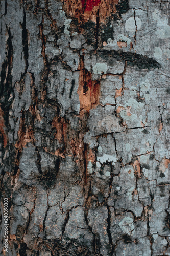texture of wood - 240898383