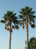 palm_trees - 240904569
