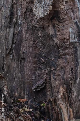 Split Tree Trunk Texture - 240921934