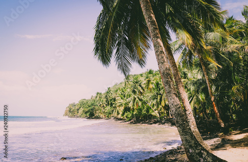 Beautiful beach with lots of plam trees aon Bastimentos Island in Panama