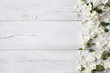 White wooden background with white spring flowers