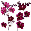 Collection of vector realistic orchids for design