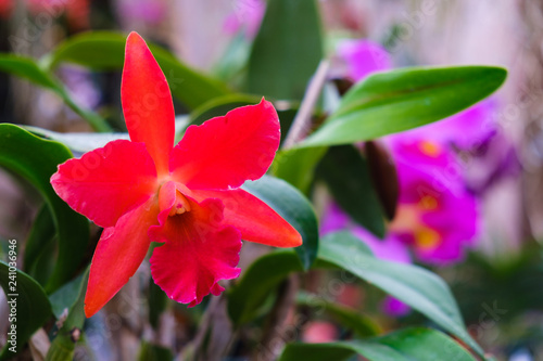 Exotic Orchids - 241036946