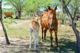 cavalo 3 - 241041525
