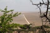 Die Savanne der Serengeti - 241078320