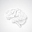Paper human brain