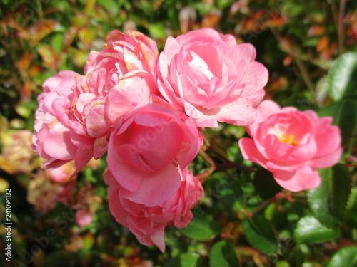 fotografias de flores y plantas varias naturaleza  - 241094132