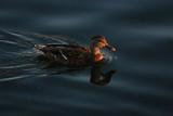 fotografias de aves varias  - 241095182