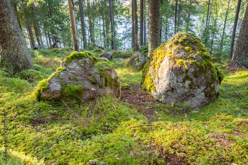 Big rock in forest nature landscape - 241113992