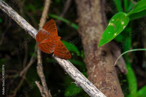 Insetos borboleta bug