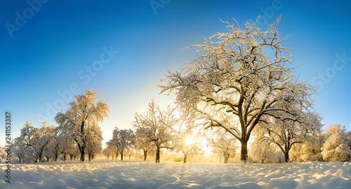 Leinwanddruck Bild Verzauberte Landschaft im Winter