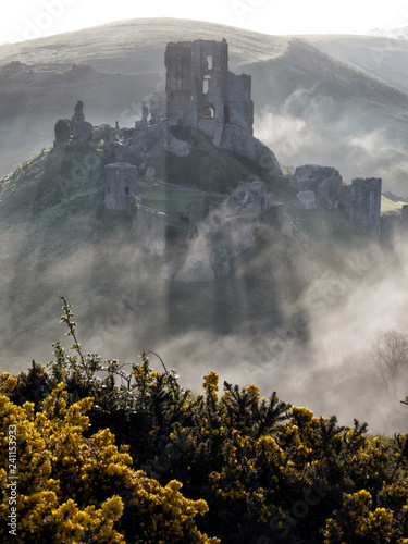 Corfe Castle, Dorset, in the early morning mist with yellow gorse