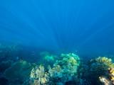 red sea, underwater world