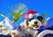 Leinwanddruck Bild - funny christmas dog with sunglasses