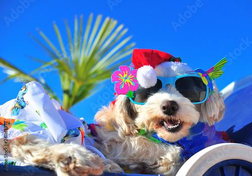 Leinwanddruck Bild funny christmas dog with sunglasses