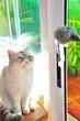 Leinwanddruck Bild - portrait of exotic persian cat