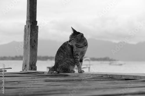 obraz PCV Cat
