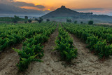 Vineyard with Davalillo castle as background, La Rioja, Spain - 241230172