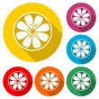 Organic logo. Orange logo. Orange icon, color set  - 241242578