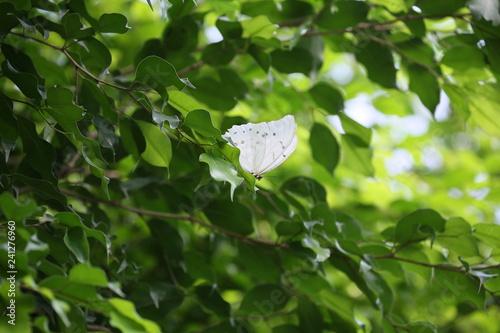 obraz lub plakat fotografias de insectos varios mariposas