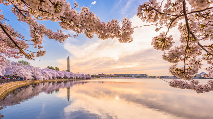 Washington DC, USA in spring season