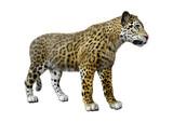 3D Rendering Big Cat Jaguar on White