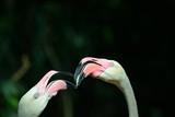 Nahaufnahme von Flamingos, Thailand