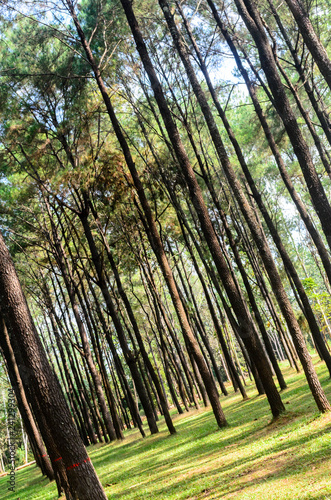 trees in the forest - 241299304