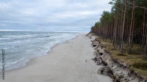morze plaża drzewa woda - 241306137