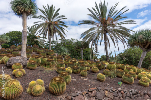 Tropical garden on Fuerteventura. Canary Island. Spain