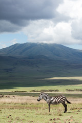 Zebra standing with Tanzanian mountaneous landscape in background